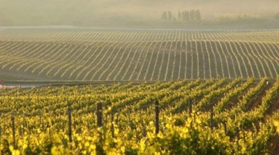 Sicily, wine, Etna, Illva, Saronno, Monica Larner