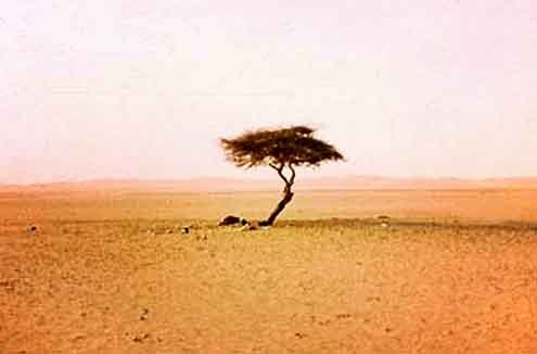 Nothing for hundreds of miles around it in the barren Sahara.