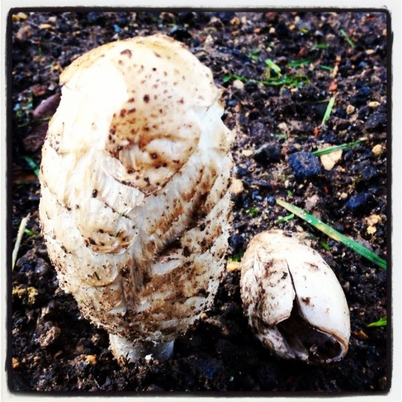 Mushroom discovering nature