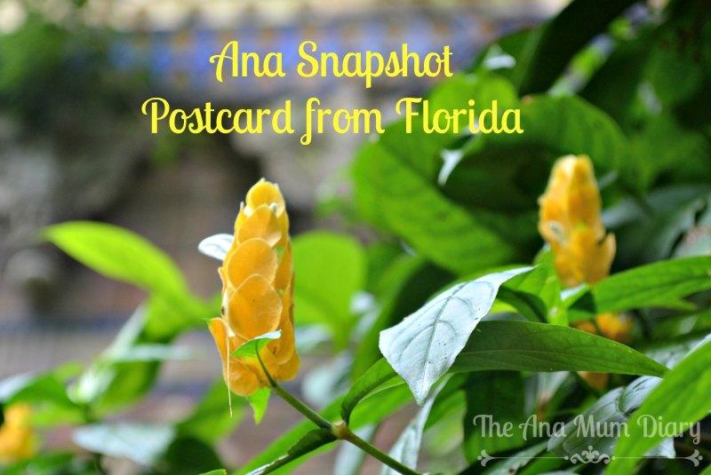 Flowers Florida