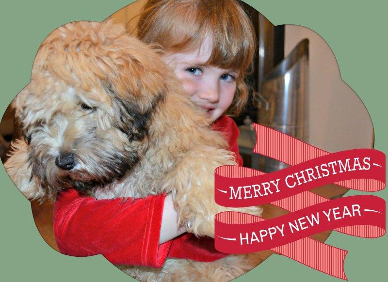 Safety Dog Christmas