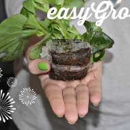 The Ana Garden : Easy Grow from B & Q