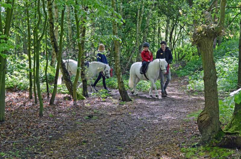 Activities at Center Parcs Pony Ride