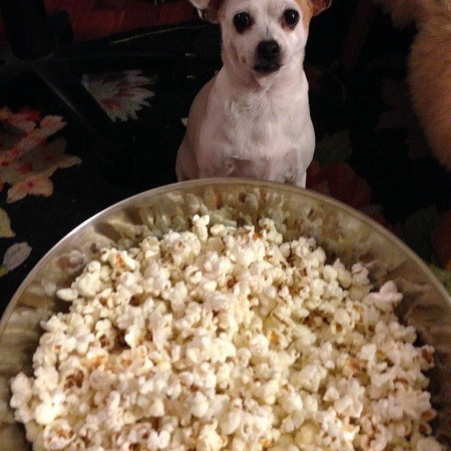 Can dogs eat popcorn with butter