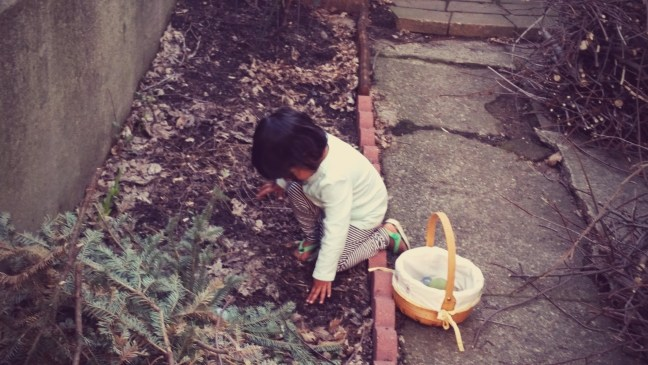Asha's backyard Easter Egg hunt  at Quinlan's