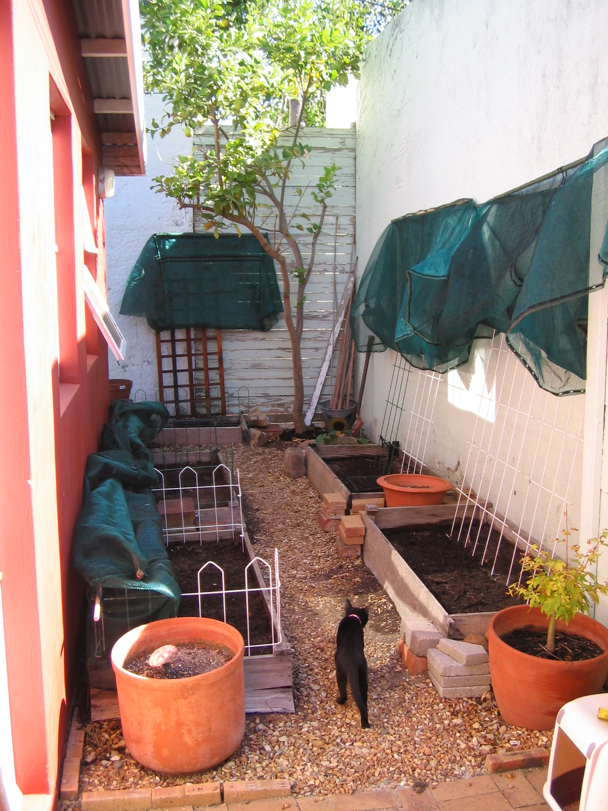 I cleaned up the beds and installed shade netting to keep Perry out of them. Here's the culprit inspecting my handiwork