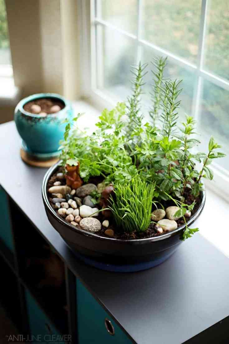How to Make Your Own DIY Indoor Cat Garden (ad)