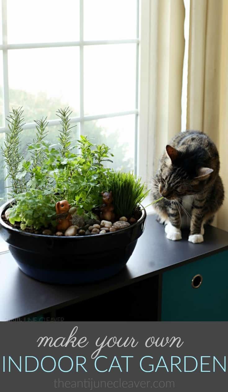 how to make an amazing diy indoor cat garden was last modified may 1st 2018 by regan - Diy Indoor Garden