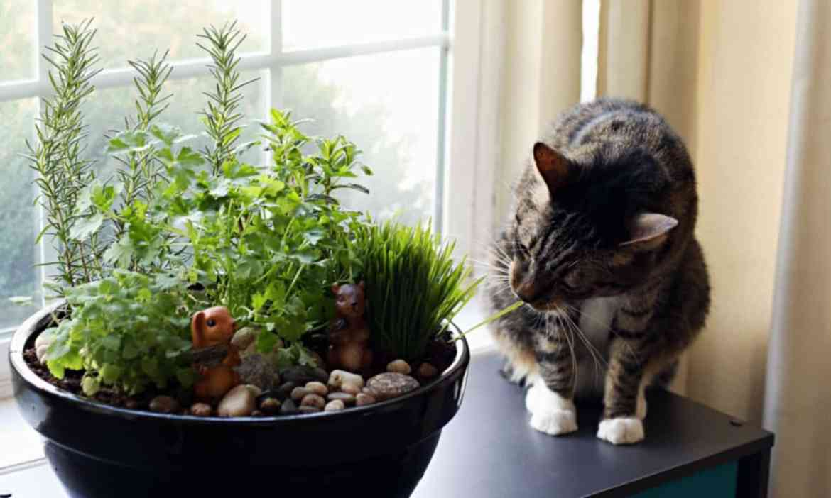 How to Make Your Own DIY Indoor Cat Garden (ad)