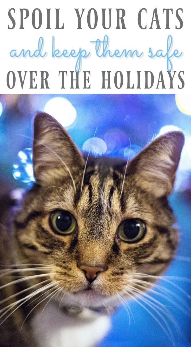 Spoil Your Cats & Tips to Keep Cats Safe Over the Christmas Holidays @kriserspets #HolidaysAtKrisers AD https://ooh.li/beb0d3d