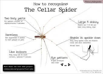 Cellar Spider ID card - with project info