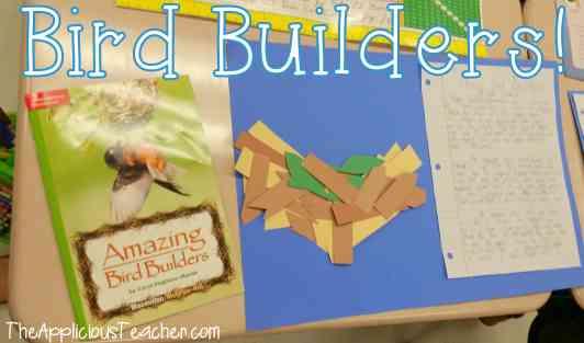 building bird nests