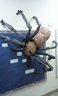 Massive spider diagram bulletin board. Love this for a spider unit!
