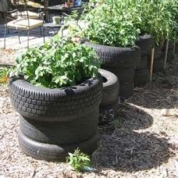 Potatoes_in_Tires