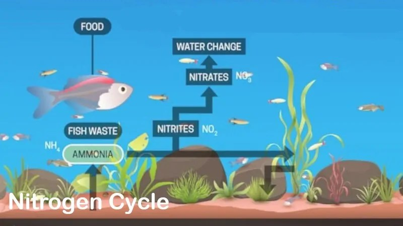 the nitrogen cycle what are the nitrogen cycle steps