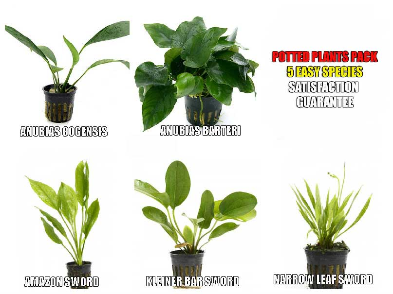 Aquarium Plants Free Shipping