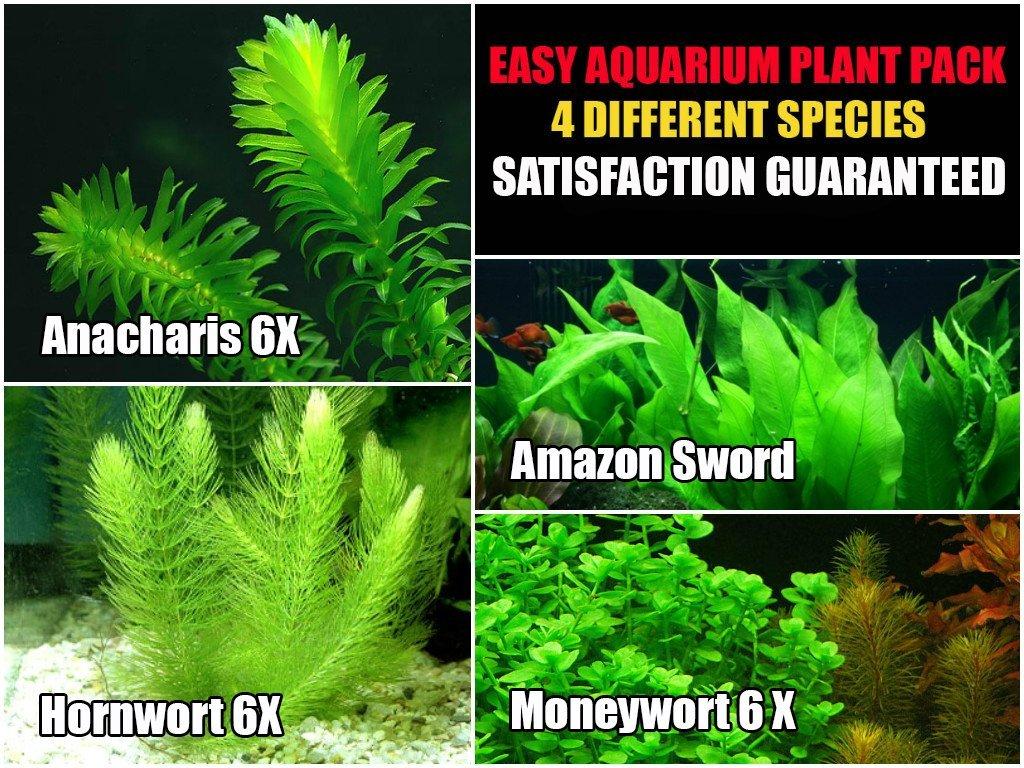 Easy Live Aquarium Plants Package 4 Kinds Anacharis
