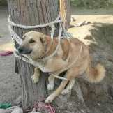 Someone didn't want his dog anymore, so felt it was necessary to literally bind his entire body with rope up against a tree. No response about the status or whereabouts of the dog was given.