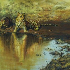 Cheetahs by the water