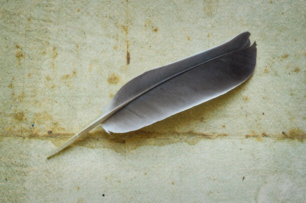 Single feather wide