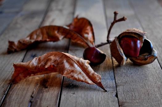 Leaves Kernel Conkers