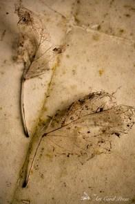 Ghost leaves 4