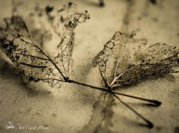 Ghost leaves 6