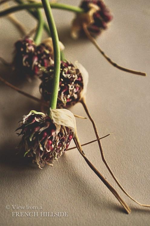 Garlic & Flowers 10