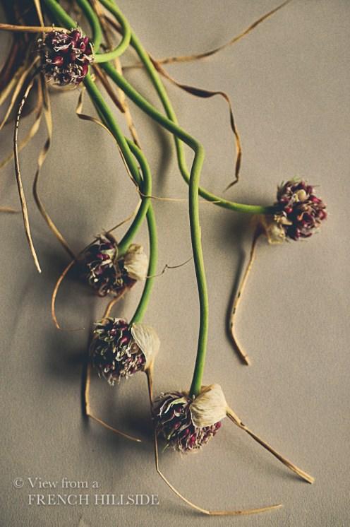 Garlic & Flowers 5