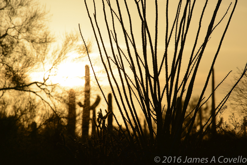 Ocotillo Silhouette, West of Tucson Mountains, Arizona, April 2016. Nikon D800, AF-S Nikkor 300mm f/4E PF ED VR, 1/350 sec, f/11, ISO 100. Copyright 2016 by James A. Covello.