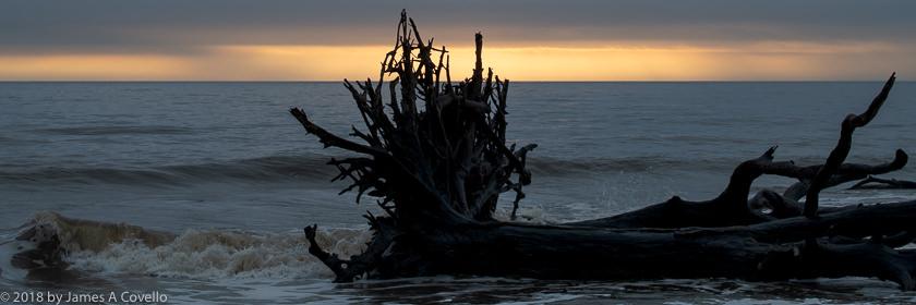 Gallery: Driftwood Beach, Jekyll Island, Georgia