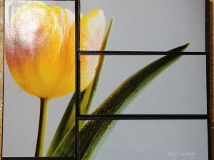 Tulip in Pieces by Kelly Cushing