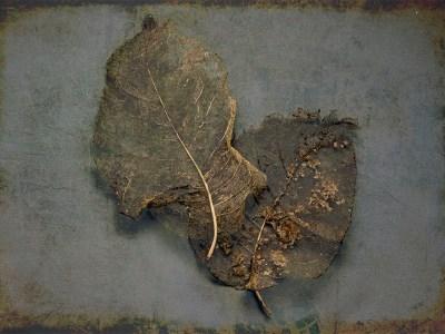 Magnolia Leaves Grunge