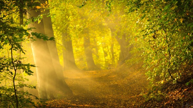 https://i2.wp.com/theartmad.com/wp-content/uploads/2015/04/Magical-Forest-Path-1.jpg?resize=650%2C366