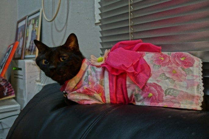 my 12 years old black cat, lovely MEEGS. Her kimono from JAPAN!
