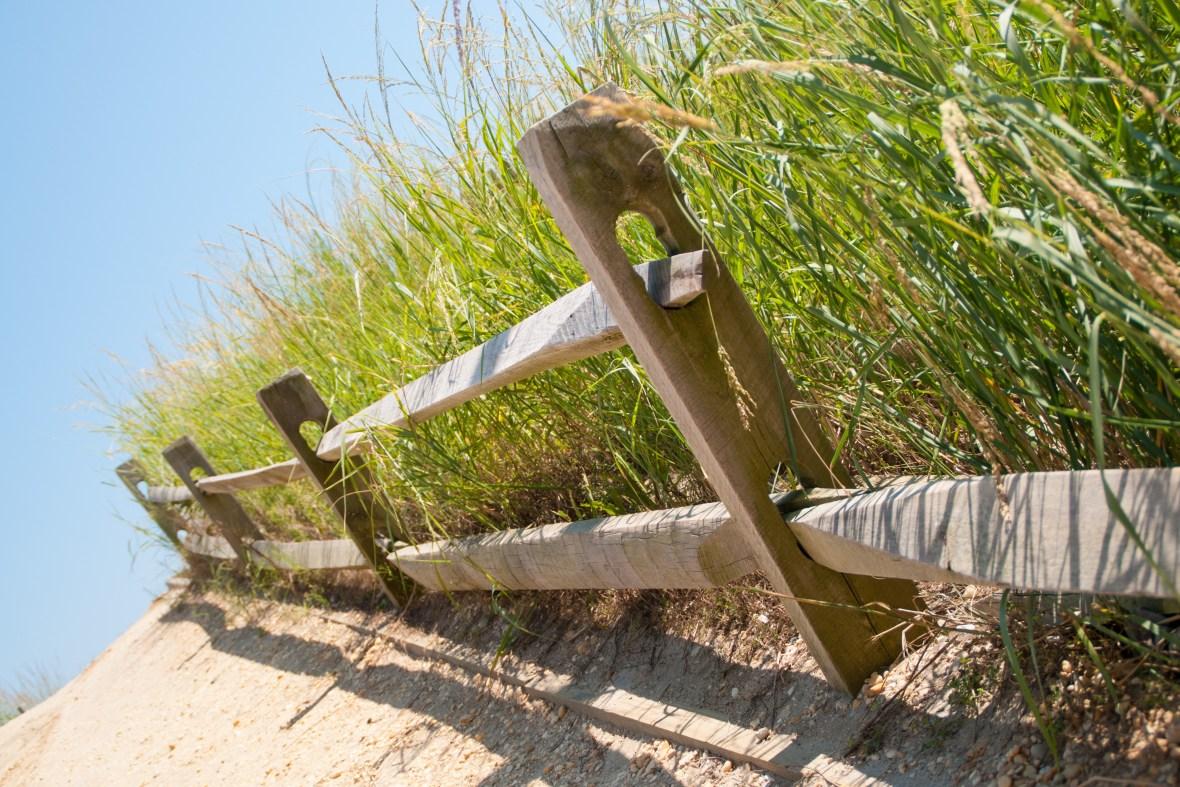 brigantine sea grass