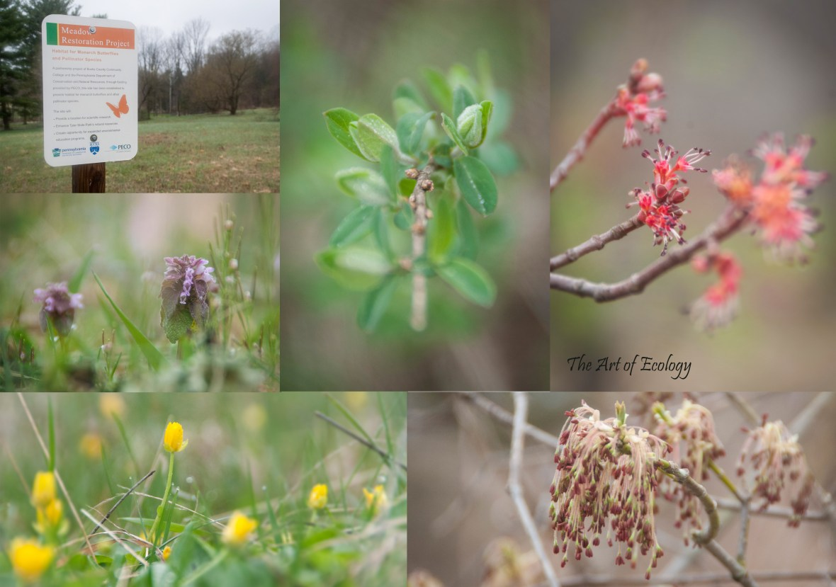 Spring 2018 Selections from Tyler State Park Pollinator Habitat Restoration Photography