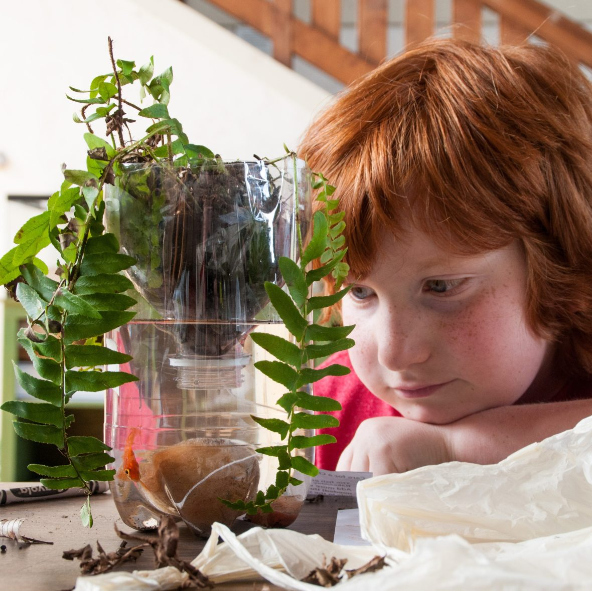 Creating an aquaponics system in Enrichment Programs for Students