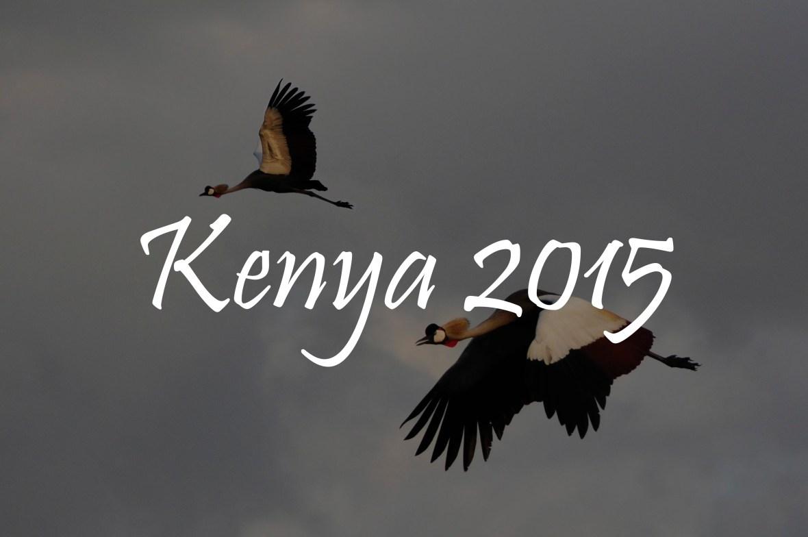 Kenya 2015 portfolios