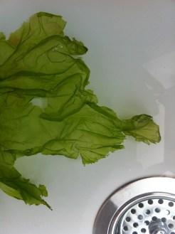West Wittering seaweed