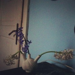 Fennel in porcelain