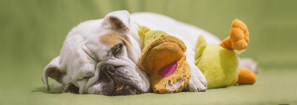 How To Wake A Sleeping Brain