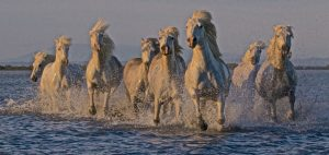 Sarah Cail Horses