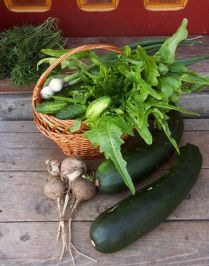 Early season harvest
