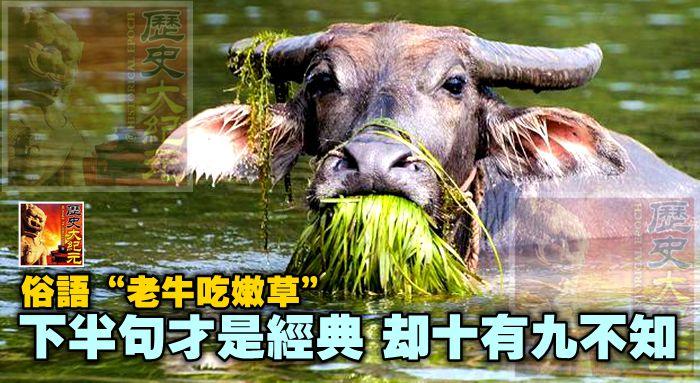 """俗語""""老牛吃嫩草"""",下半句才是經典,卻十有九不知"""