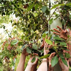 מקהלה בוטנית Botanic Chorus