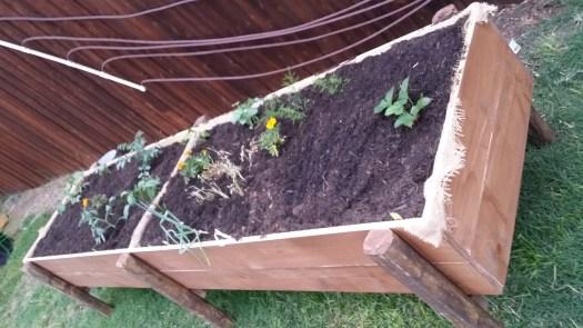 tAB - raised garden (15)