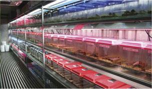 Rows of 'artificial bogs' in the quarantine facility at Tidbinbilla.