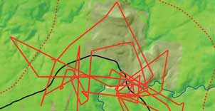 Detail of the weekly movement patterns of a single wild dog tracked in the Long Plain area of northern Kosciuszko National Park - convoluted but within a defined home range. Diagram by Douglas Mills.