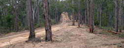 Protecting local communities, strategic widening of roads like Yalmy Road